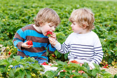 Two little friends having fun on strawberry farm in summer Stock Photo