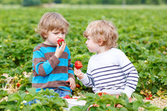 Two little friends having fun on strawberry farm in summer Royalty Free Stock Photography