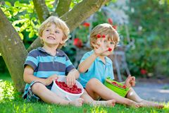 Two little friends, kid boys having fun on raspberry farm in summer. Children eating healthy organic food, fresh berries. Happy twins. Cute gardeners, toddlers stock photography