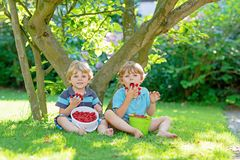 Two little friends, kid boys having fun on raspberry farm in summer. Children eating healthy organic food, fresh berries. Happy twins. Cute gardeners, toddlers stock images