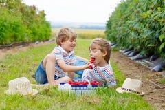 Two little friends, kid boys having fun on raspberry farm Royalty Free Stock Photos