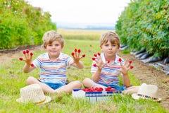 Two little friends, kid boys having fun on raspberry farm Stock Image