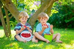 Two little friends, kid boys having fun on raspberry farm in summer. Children eating healthy organic food, fresh berries. Happy twins. Cute gardeners, toddlers stock image