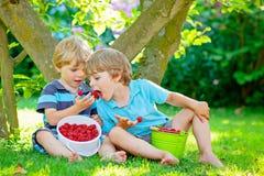 Two little friends, kid boys having fun on raspberry farm in summer. Children eating healthy organic food, fresh berries. Happy twins. Cute gardeners, toddlers royalty free stock photo