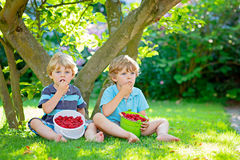 Two little friends, kid boys having fun on raspberry farm in summer. Children eating healthy organic food, fresh berries. Happy twins. Cute gardeners, toddlers royalty free stock photography