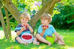 Two little friends, kid boys having fun on raspberry farm in summer. Children eating healthy organic food, fresh berries. Happy twins. Cute gardeners, toddlers royalty free stock photos