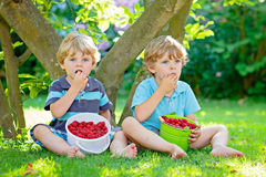 Two little friends, kid boys having fun on raspberry farm in summer. Children eating healthy organic food, fresh berries. Happy twins. Cute gardeners, toddlers stock photo