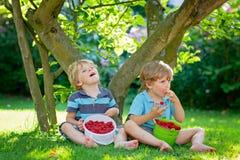 Two little friends, kid boys having fun on raspberry farm in summer. Children eating healthy organic food, fresh berries. Happy twins. Cute gardeners, toddlers stock photos