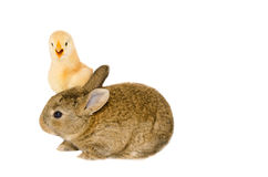 Two little fun animals Stock Photography