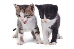 Two little funny kitten isolated on white Stock Photography