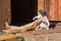 Two little funny kittens playing outdoors in summer Stock Image