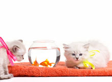 Kittens and fishes Stock Photos