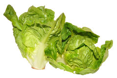 Two Little Gem Lettuce Stock Photo
