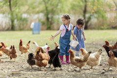 Two little girl feeding chickens Royalty Free Stock Images
