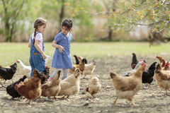 Two little girl feeding chickens Royalty Free Stock Photo
