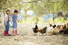 Two little girl feeding chickens stock photography