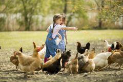 Two little girl feeding chickens Stock Photos