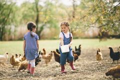 Two little girl feeding chickens Royalty Free Stock Photos