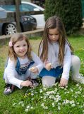 Two little girls collect daisies. Two little girls collect daisies on a green lawn stock photo
