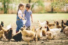 Two little girls feeding chickens royalty free stock photos
