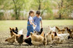 Two little girls feeding chickens Stock Images