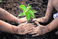 Two little girls hand planting young tree on black soil together Stock Photo