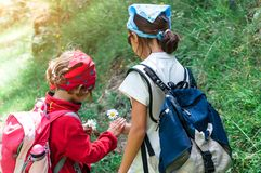 Two little girls on a hike gather flowers.  stock photos