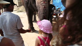 Two little girls with pink hat feeding elephant. stock video footage