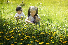 Two little girls playing in the meadow with dandelions stock photos