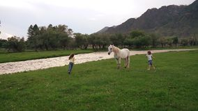 Two little girls running around the lawn around horses. children play outdoors in a meadow. slow motion stock footage