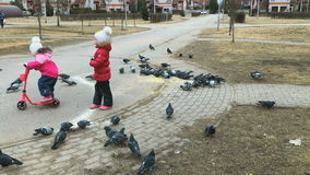 Two little girls scare pigeons in the park stock video footage