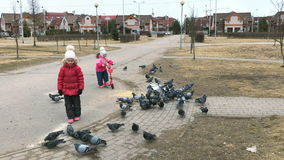 Two little girls scare pigeons in the park. VELIKIY NOVGOROD, RUSSIA - MART 25, 2017: Two little girls scare pigeons in the park in spring stock footage