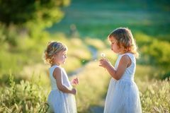 Two little girls in white dresses in the flower field. stock photography