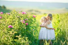 Two little girls in white dresses in the flower field. stock photo