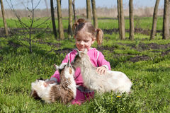 Two little goats pets stock photography