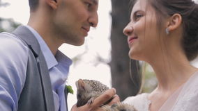 Two little happy hedgehogs in hands of bride and groom. Handsome man in gray waistcoat, blue shirt with watches on wrist holds small eared urchin with stock video