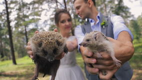 Two little happy hedgehogs in hands of bride and groom. Two happy hedgehog in the hands of the bride and groom. Handsome man in gray waistcoat, blue shirt holds stock video footage