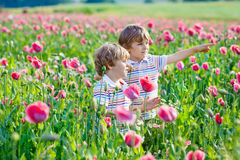 Two little kid boys in blooming poppy field Royalty Free Stock Image