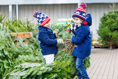 Two little kid boys buying christmas tree in outdoor shop stock photography