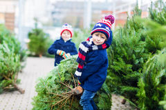 Two little kid boys buying christmas tree in outdoor shop. Two little sibling kid boys holding christmas tree. Happy children in winter clothes choosing and royalty free stock photo