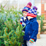 Two little kid boys buying christmas tree in outdoor shop. Two little siblings kids boys holding christmas tree. Happy children in winter fashion clothes buying royalty free stock image