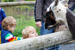 Two little kid boys feeding big lama on an animal farm Royalty Free Stock Images