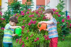 Free Two Little Kid Boys Watering Roses With Can In Garden. Family, Garden, Gardening, Lifestyle Stock Photo - 111260650