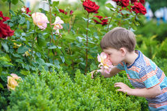 Free Two Little Kid Boys Watering Roses With Can In Garden. Family, Garden, Gardening, Lifestyle Stock Photography - 94608982