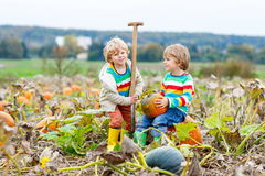 Two little kids boys with big pumpkins on patch Royalty Free Stock Images