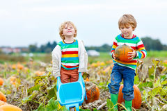 Two little kids boys with big pumpkins on patch Stock Photo