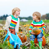 Two little kids boys with big pumpkins on patch Royalty Free Stock Photos
