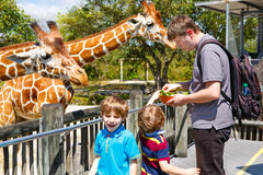 Two little kids boys and father watching and feeding giraffe in Stock Photo