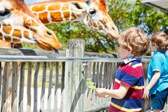 Two little kids boys and father watching and feeding giraffe in zoo. Happy children, family having fun with animals stock photography