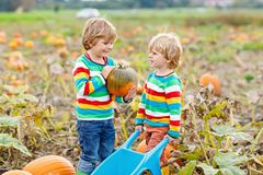 Two little kids boys picking pumpkins on Halloween or Thanksgiving pumpkin patch Royalty Free Stock Photography